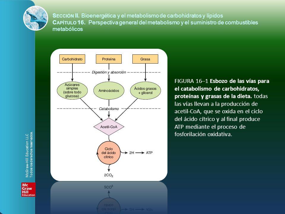 FIGURA 16–2 Perspectiva general del metabolismo de carbohidratos, que muestra las principales vías y productos terminales.