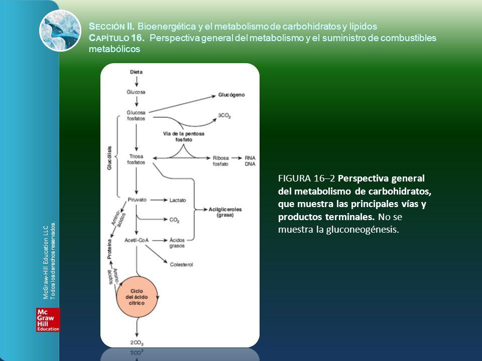 FIGURA 16–2 Perspectiva general del metabolismo de carbohidratos, que muestra las principales vías y productos terminales. No se muestra la gluconeogé