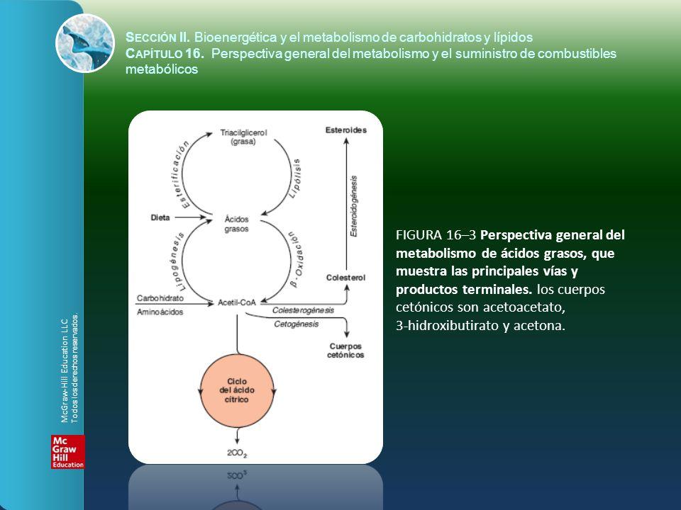 FIGURA 16–3 Perspectiva general del metabolismo de ácidos grasos, que muestra las principales vías y productos terminales. los cuerpos cetónicos son a