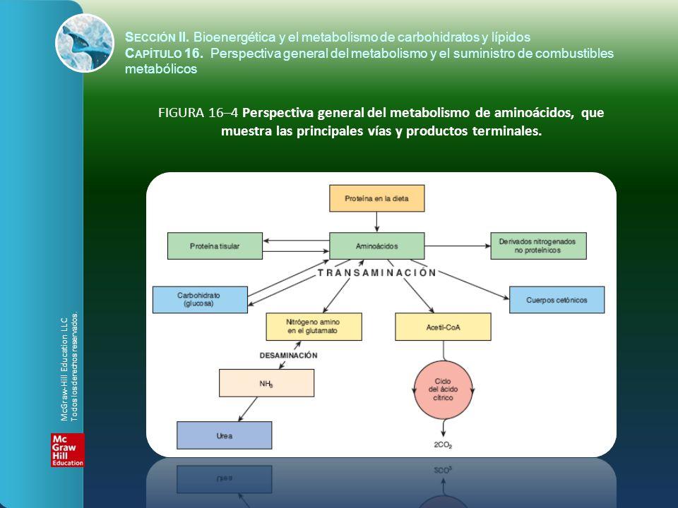 FIGURA 16–4 Perspectiva general del metabolismo de aminoácidos, que muestra las principales vías y productos terminales. S ECCIÓN II. Bioenergética y