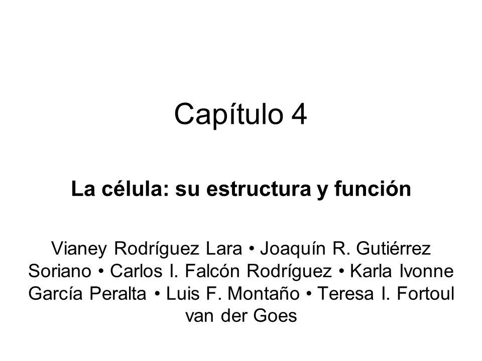 Capítulo 4 La célula: su estructura y función Vianey Rodríguez Lara Joaquín R. Gutiérrez Soriano Carlos I. Falcón Rodríguez Karla Ivonne García Peralt