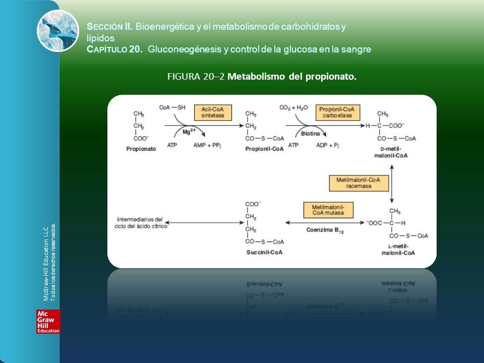 S ECCIÓN II. Bioenergética y el metabolismo de carbohidratos y lípidos C APÍTULO 20. Gluconeogénesis y control de la glucosa en la sangre FIGURA 20–2