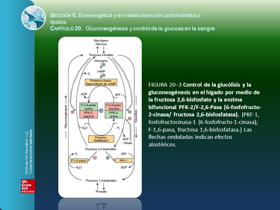 FIGURA 20–3 Control de la glucólisis y la gluconeogénesis en el hígado por medio de la fructosa 2,6-bisfosfato y la enzima bifuncional PFK-2/F-2,6-Pas