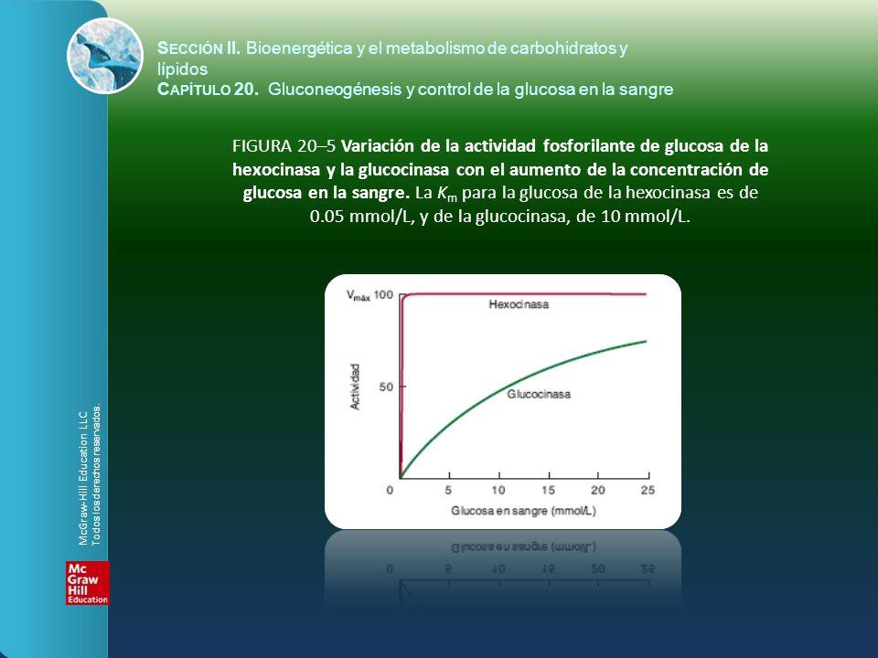 FIGURA 20–5 Variación de la actividad fosforilante de glucosa de la hexocinasa y la glucocinasa con el aumento de la concentración de glucosa en la sa