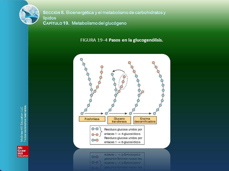 FIGURA 19–4 Pasos en la glucogenólisis. S ECCIÓN II. Bioenergética y el metabolismo de carbohidratos y lípidos C APÍTULO 19. Metabolismo del glucógeno