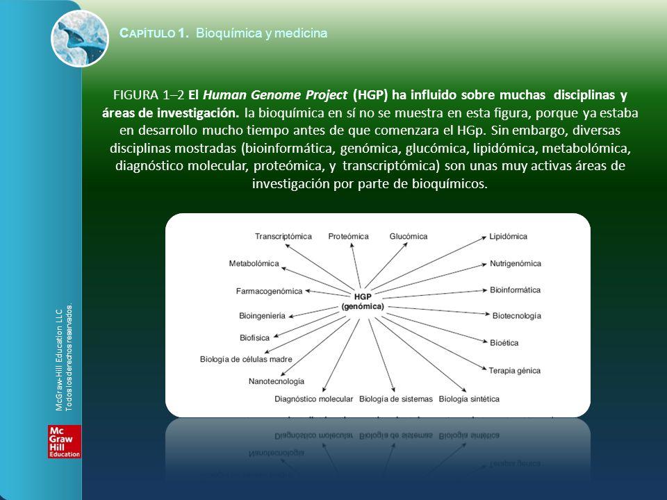 C APÍTULO 1. Bioquímica y medicina FIGURA 1–2 El Human Genome Project (HGP) ha influido sobre muchas disciplinas y áreas de investigación. la bioquími