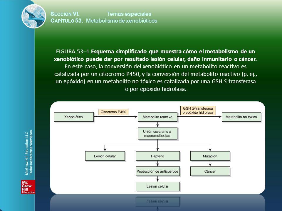 S ECCIÓN VI.Temas especiales C APÍTULO 53. Metabolismo de xenobióticos FIGURA 53–1 Esquema simplificado que muestra cómo el metabolismo de un xenobiót