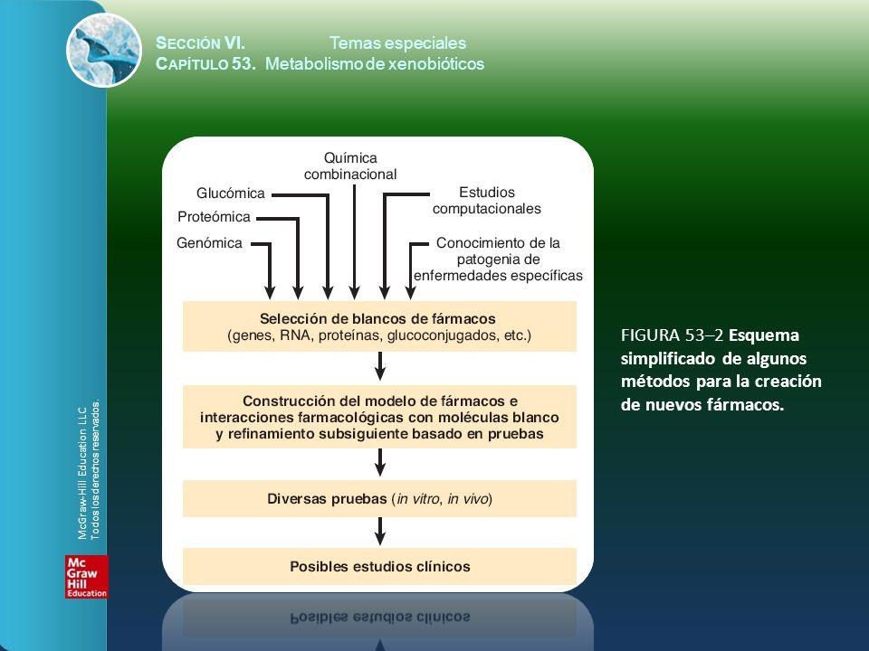 S ECCIÓN VI.Temas especiales C APÍTULO 53. Metabolismo de xenobióticos FIGURA 53–2 Esquema simplificado de algunos métodos para la creación de nuevos