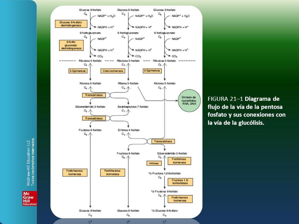 FIGURA 21–1 Diagrama de flujo de la vía de la pentosa fosfato y sus conexiones con la vía de la glucólisis. McGraw-Hill Education LLC Todos los derech
