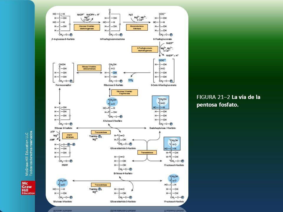 FIGURA 21–2 La vía de la pentosa fosfato. McGraw-Hill Education LLC Todos los derechos reservados.
