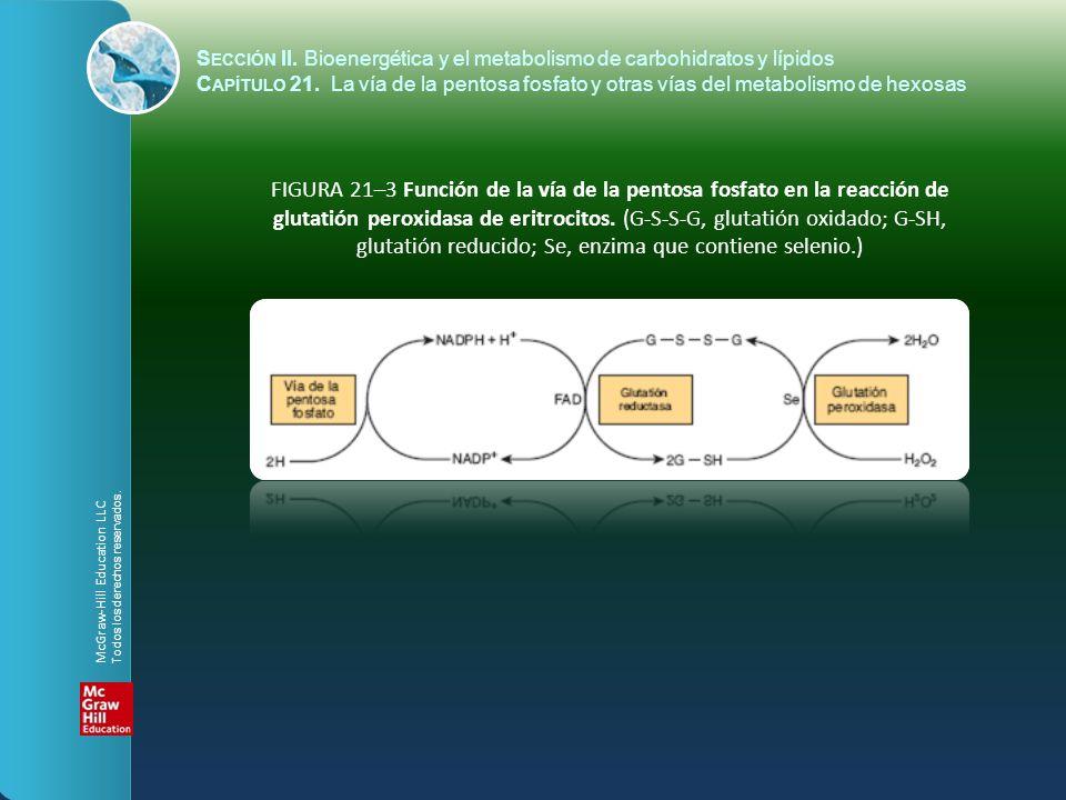 S ECCIÓN II. Bioenergética y el metabolismo de carbohidratos y lípidos C APÍTULO 21. La vía de la pentosa fosfato y otras vías del metabolismo de hexo