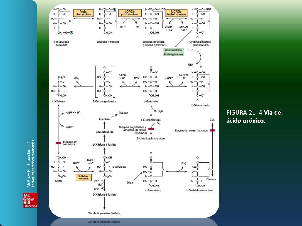 FIGURA 21–4 Vía del ácido urónico. McGraw-Hill Education LLC Todos los derechos reservados.
