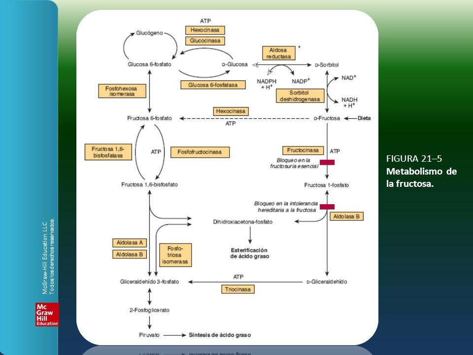 FIGURA 21–5 Metabolismo de la fructosa. McGraw-Hill Education LLC Todos los derechos reservados.