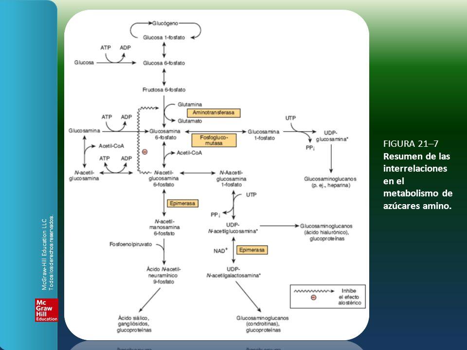 FIGURA 21–7 Resumen de las interrelaciones en el metabolismo de azúcares amino. McGraw-Hill Education LLC Todos los derechos reservados.
