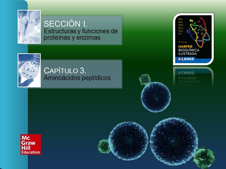 SECCIÓN I. Estructuras y funciones de proteínas y enzimas C APÍTULO 3. Aminoácidos peptídicos