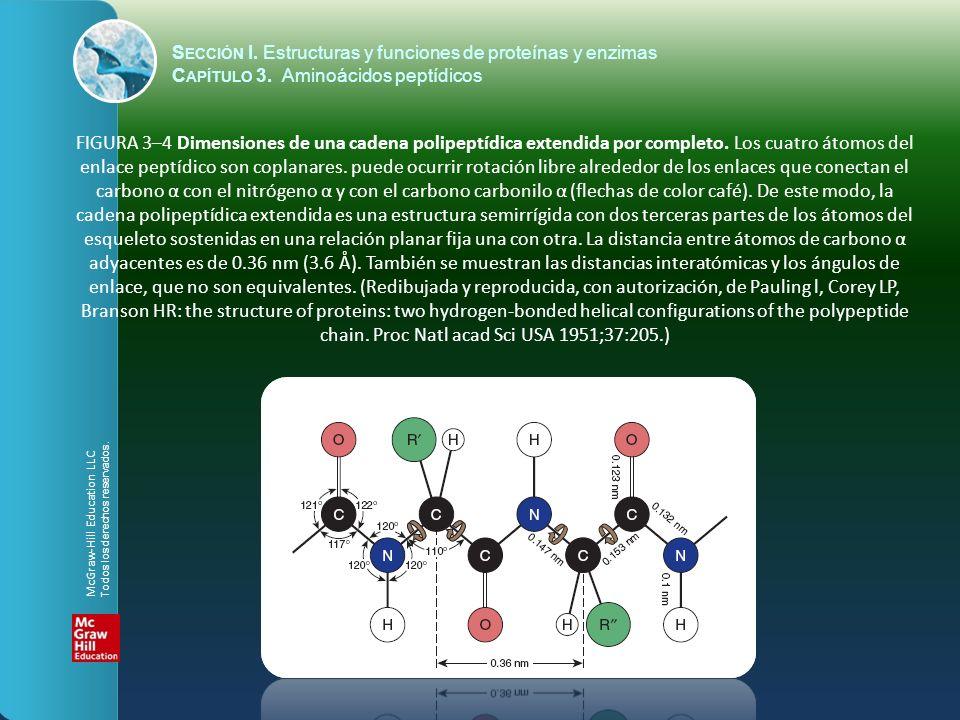 S ECCIÓN I. Estructuras y funciones de proteínas y enzimas C APÍTULO 3. Aminoácidos peptídicos FIGURA 3–4 Dimensiones de una cadena polipeptídica exte