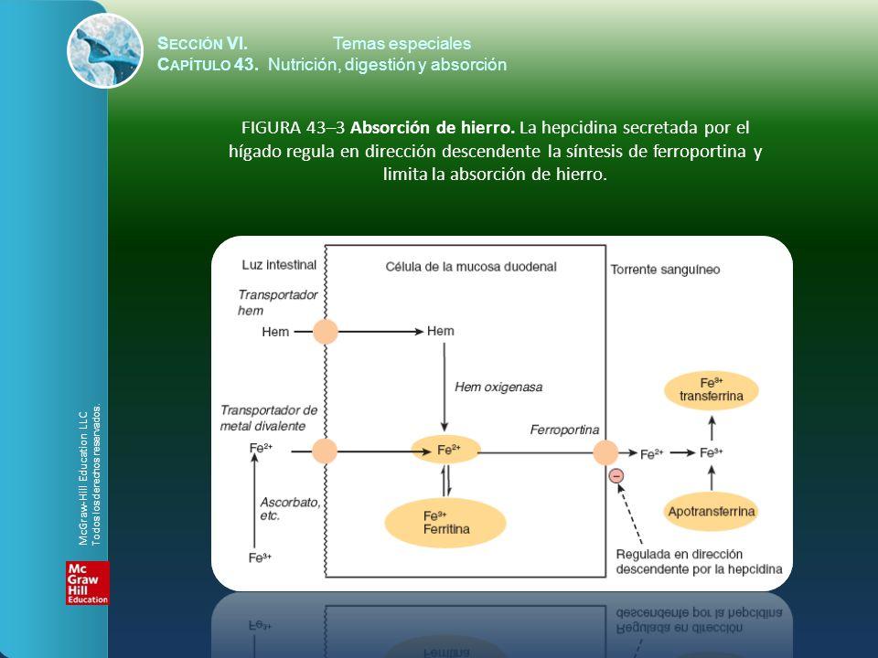 S ECCIÓN VI.Temas especiales C APÍTULO 43. Nutrición, digestión y absorción FIGURA 43–3 Absorción de hierro. La hepcidina secretada por el hígado regu