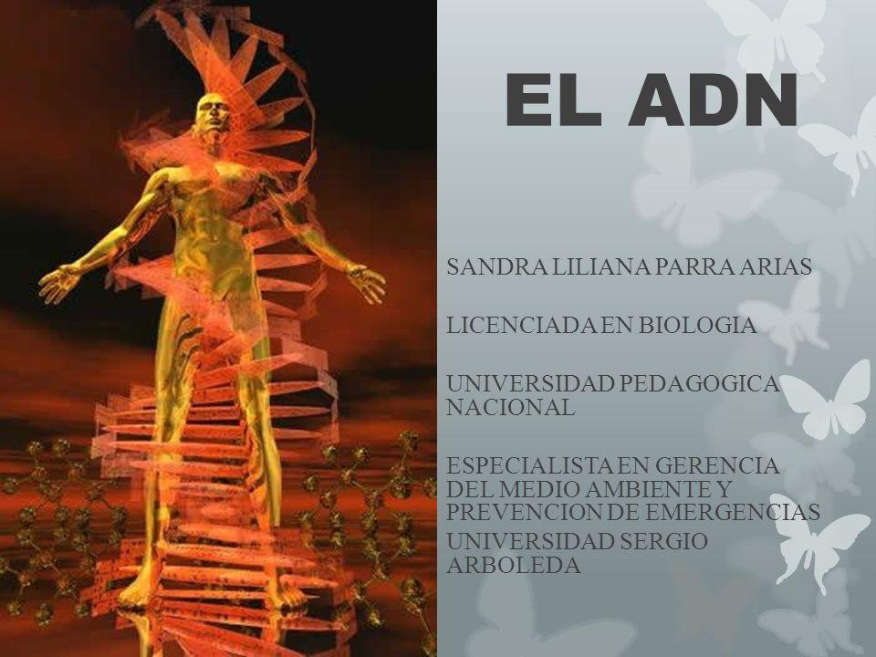 EL ADN SANDRA LILIANA PARRA ARIAS LICENCIADA EN BIOLOGIA UNIVERSIDAD PEDAGOGICA NACIONAL ESPECIALISTA EN GERENCIA DEL MEDIO AMBIENTE Y PREVENCION DE E