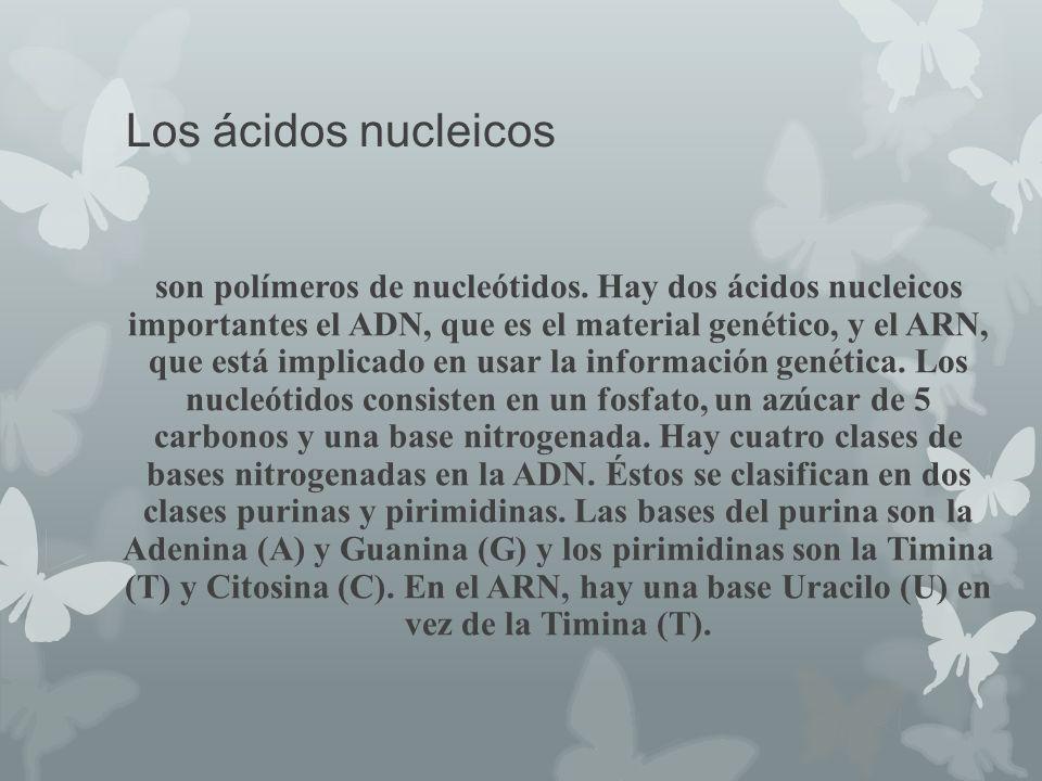 Los ácidos nucleicos son polímeros de nucleótidos. Hay dos ácidos nucleicos importantes el ADN, que es el material genético, y el ARN, que está implic