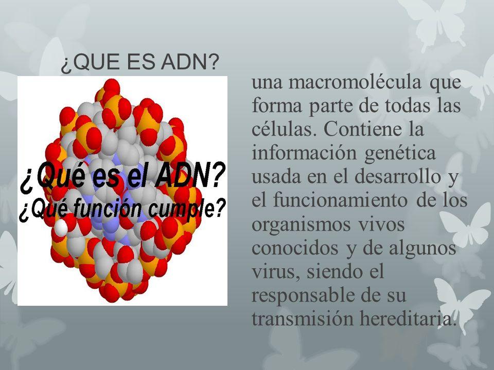 ¿QUE ES ADN? una macromolécula que forma parte de todas las células. Contiene la información genética usada en el desarrollo y el funcionamiento de lo