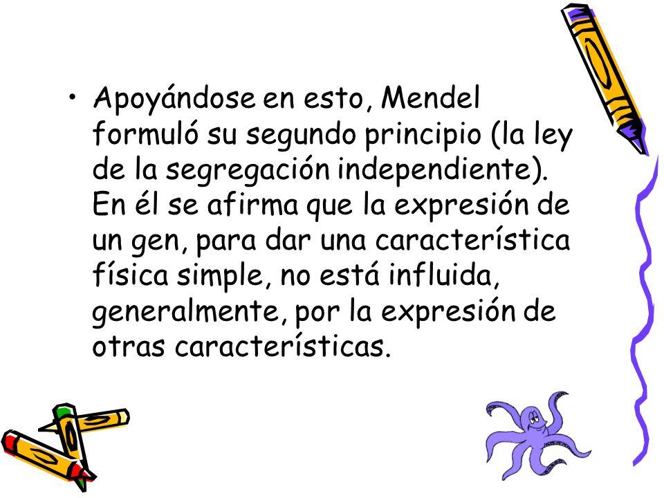 Apoyándose en esto, Mendel formuló su segundo principio (la ley de la segregación independiente). En él se afirma que la expresión de un gen, para dar