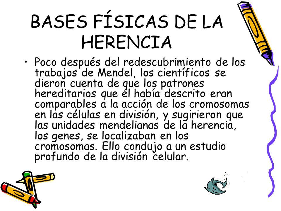 BASES FÍSICAS DE LA HERENCIA Poco después del redescubrimiento de los trabajos de Mendel, los científicos se dieron cuenta de que los patrones heredit