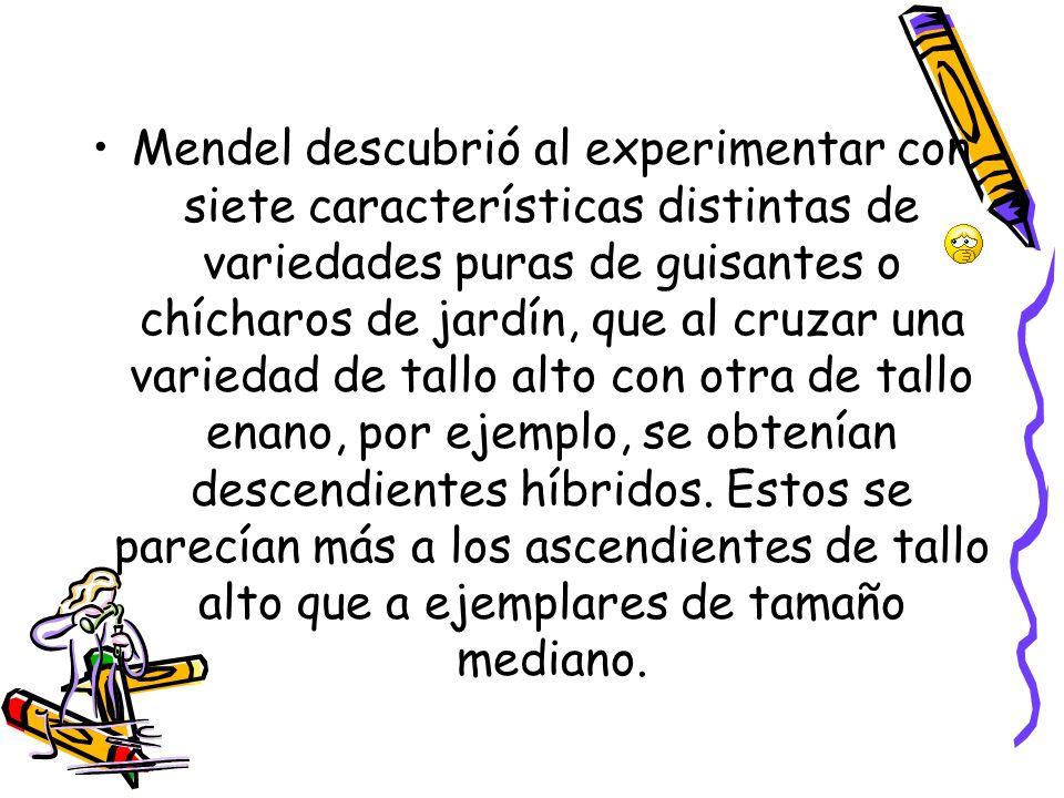 Mendel descubrió al experimentar con siete características distintas de variedades puras de guisantes o chícharos de jardín, que al cruzar una varieda