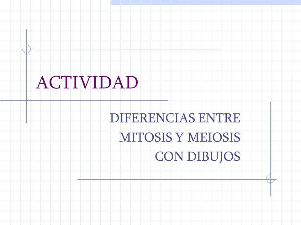 ACTIVIDAD DIFERENCIAS ENTRE MITOSIS Y MEIOSIS CON DIBUJOS