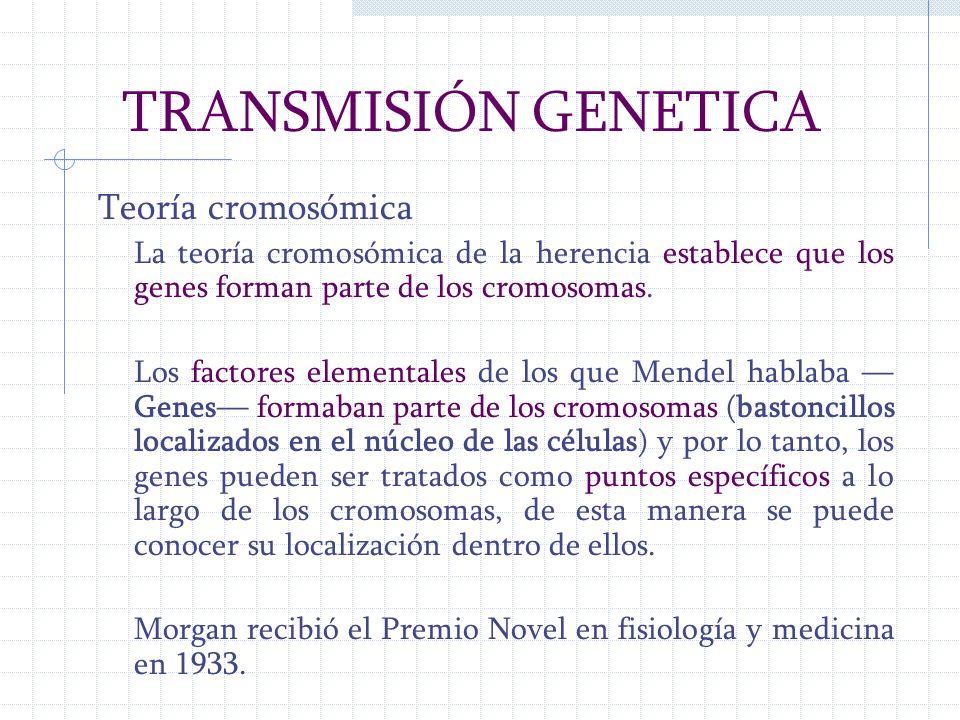 TRANSMISIÓN GENETICA Teoría cromosómica La teoría cromosómica de la herencia establece que los genes forman parte de los cromosomas. Los factores elem