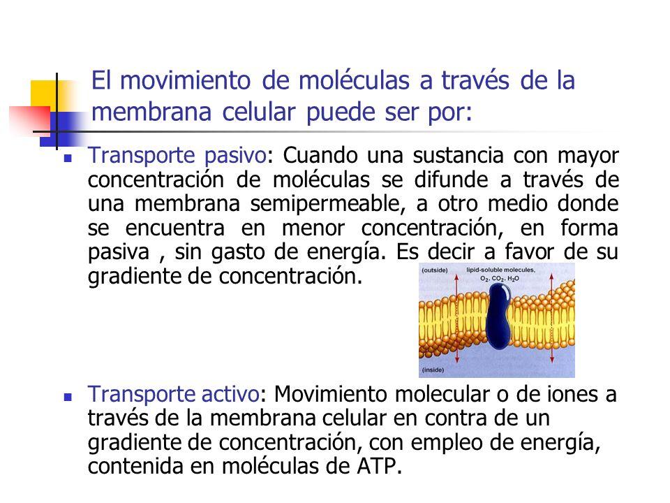 El movimiento de moléculas a través de la membrana celular puede ser por: Transporte pasivo: Cuando una sustancia con mayor concentración de moléculas se difunde a través de una membrana semipermeable, a otro medio donde se encuentra en menor concentración, en forma pasiva, sin gasto de energía.