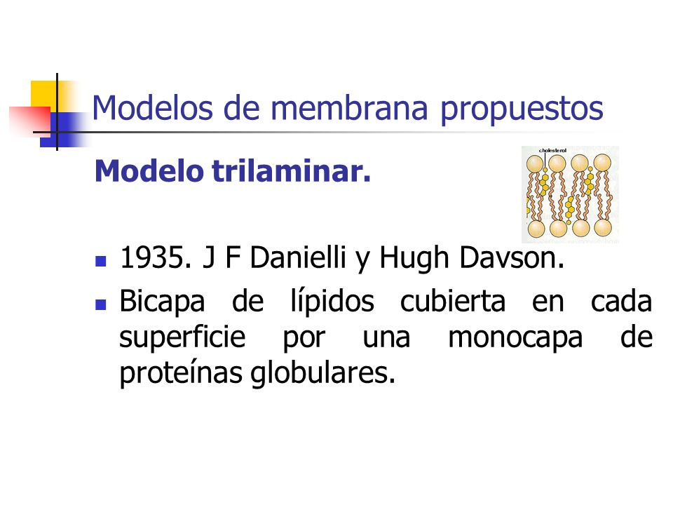 Modelos de membrana propuestos Modelo trilaminar.1935.