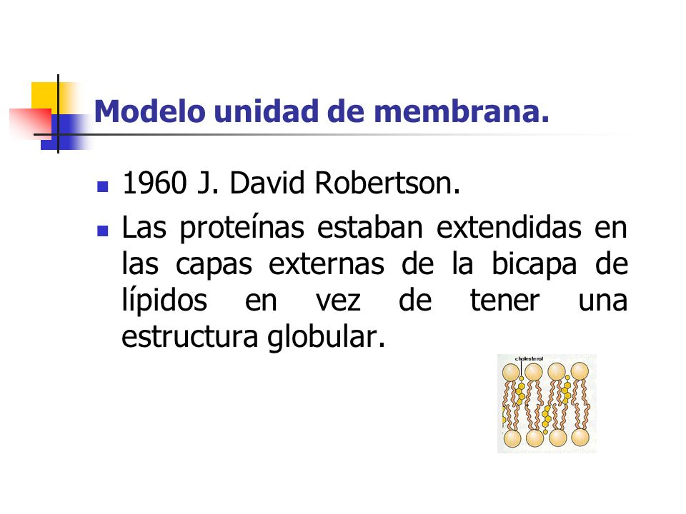 Modelo unidad de membrana.1960 J. David Robertson.