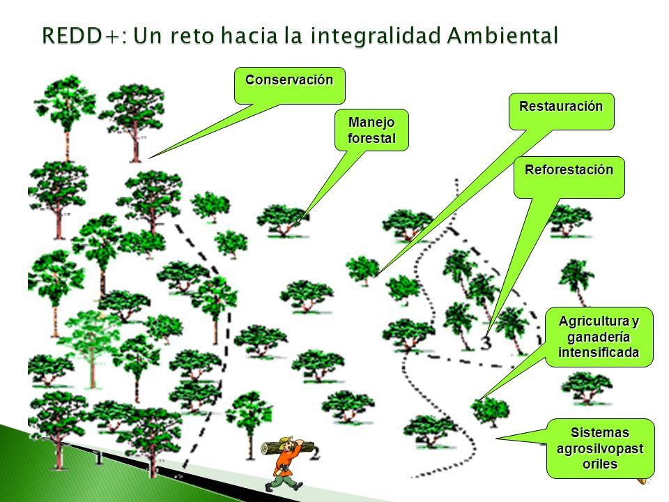 Oportunidades como potencial Financiamiento Sector Forestal Desafíos Mercado Nacional Consolidación PSA Otros Incentivos positivos. Uso sostenible de