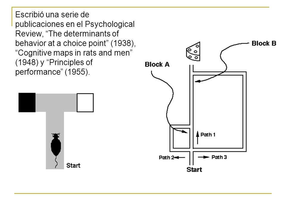 Escribió una serie de publicaciones en el Psychological Review, The determinants of behavior at a choice point (1938), Cognitive maps in rats and men