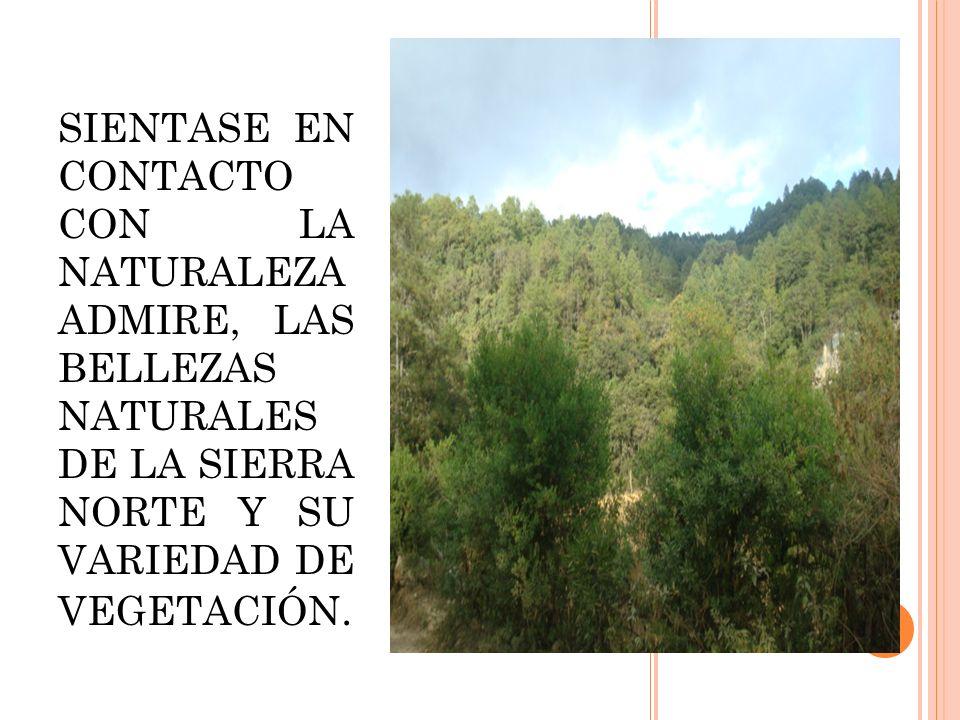 SIENTASE EN CONTACTO CON LA NATURALEZA ADMIRE, LAS BELLEZAS NATURALES DE LA SIERRA NORTE Y SU VARIEDAD DE VEGETACIÓN.