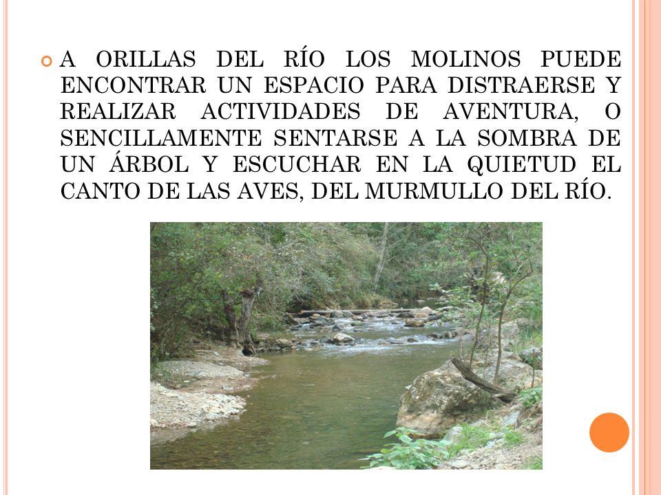 A ORILLAS DEL RÍO LOS MOLINOS PUEDE ENCONTRAR UN ESPACIO PARA DISTRAERSE Y REALIZAR ACTIVIDADES DE AVENTURA, O SENCILLAMENTE SENTARSE A LA SOMBRA DE UN ÁRBOL Y ESCUCHAR EN LA QUIETUD EL CANTO DE LAS AVES, DEL MURMULLO DEL RÍO.