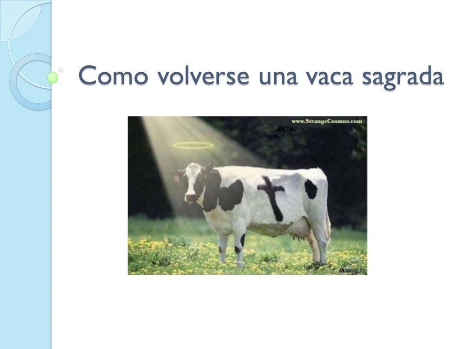 Para empezar usted ya es una vaca sagrada Para volverse una vaca sagrada lo importante es la actitud.