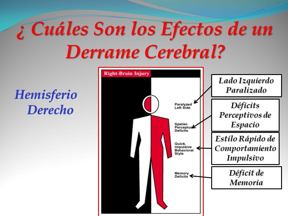 ¿ Cuáles Son los Efectos de un Derrame Cerebral? Hemisferio Derecho Lado Izquierdo Paralizado Déficits Perceptivos de Espacio Estilo Rápido de Comport