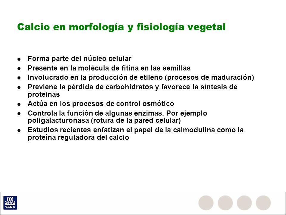 Calcio en morfología y fisiología vegetal Forma parte del núcleo celular Presente en la molécula de fitina en las semillas Involucrado en la producció