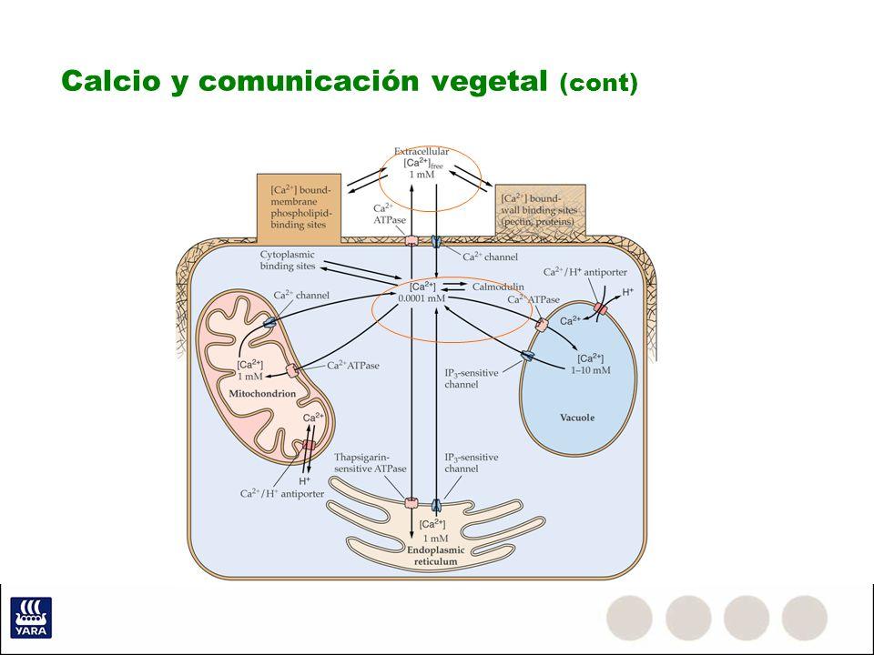 Calcio y comunicación vegetal (cont)