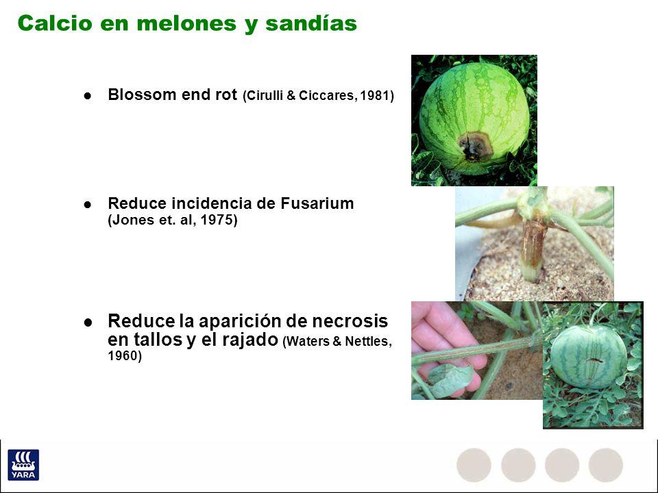 Calcio en melones y sandías Blossom end rot (Cirulli & Ciccares, 1981) Reduce incidencia de Fusarium (Jones et. al, 1975) Reduce la aparición de necro
