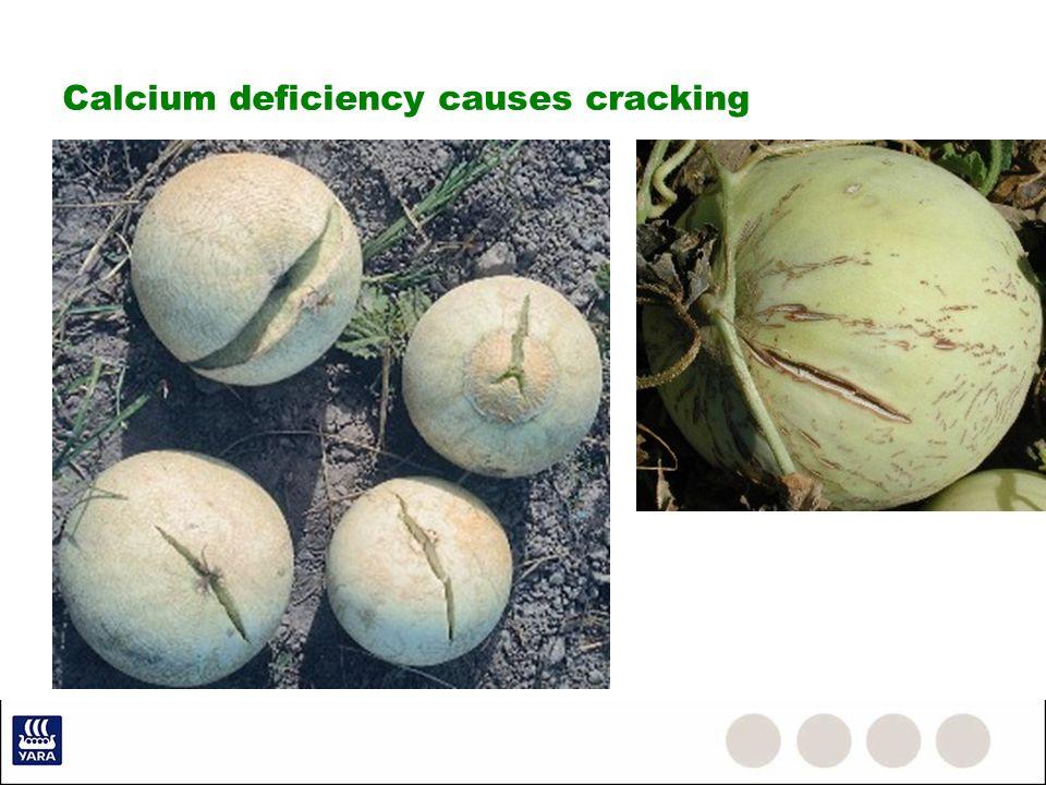 Calcium deficiency causes cracking