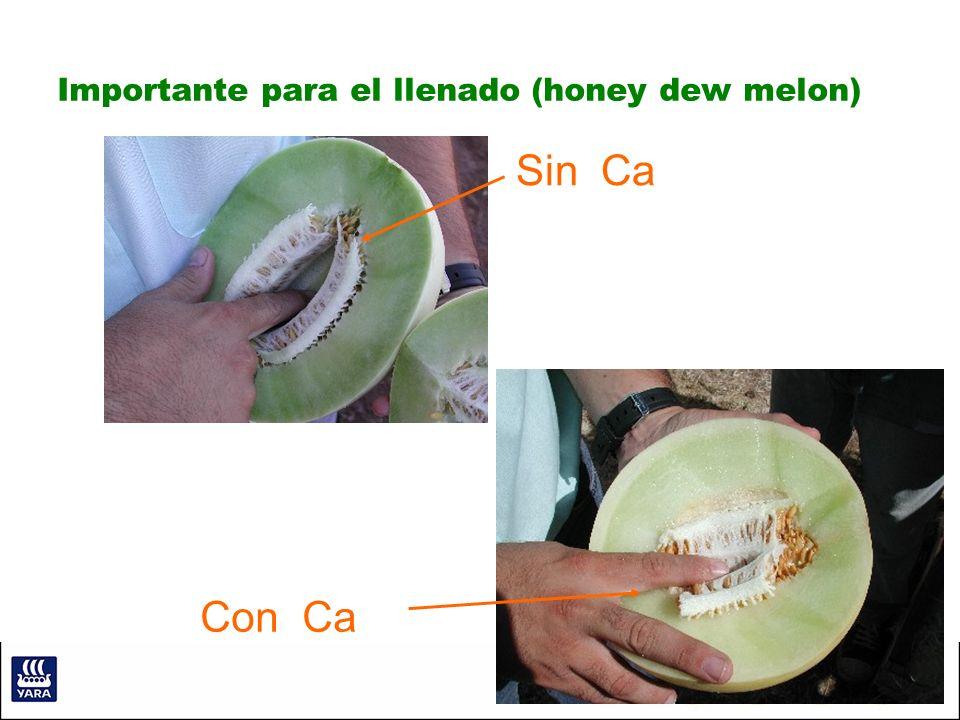 Importante para el llenado (honey dew melon) Sin Ca Con Ca