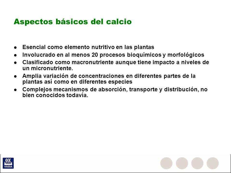 Aspectos básicos del calcio Esencial como elemento nutritivo en las plantas Involucrado en al menos 20 procesos bioquímicos y morfológicos Clasificado