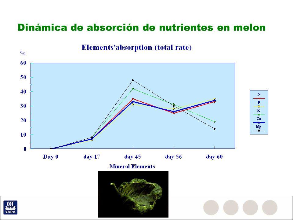 Dinámica de absorción de nutrientes en melon