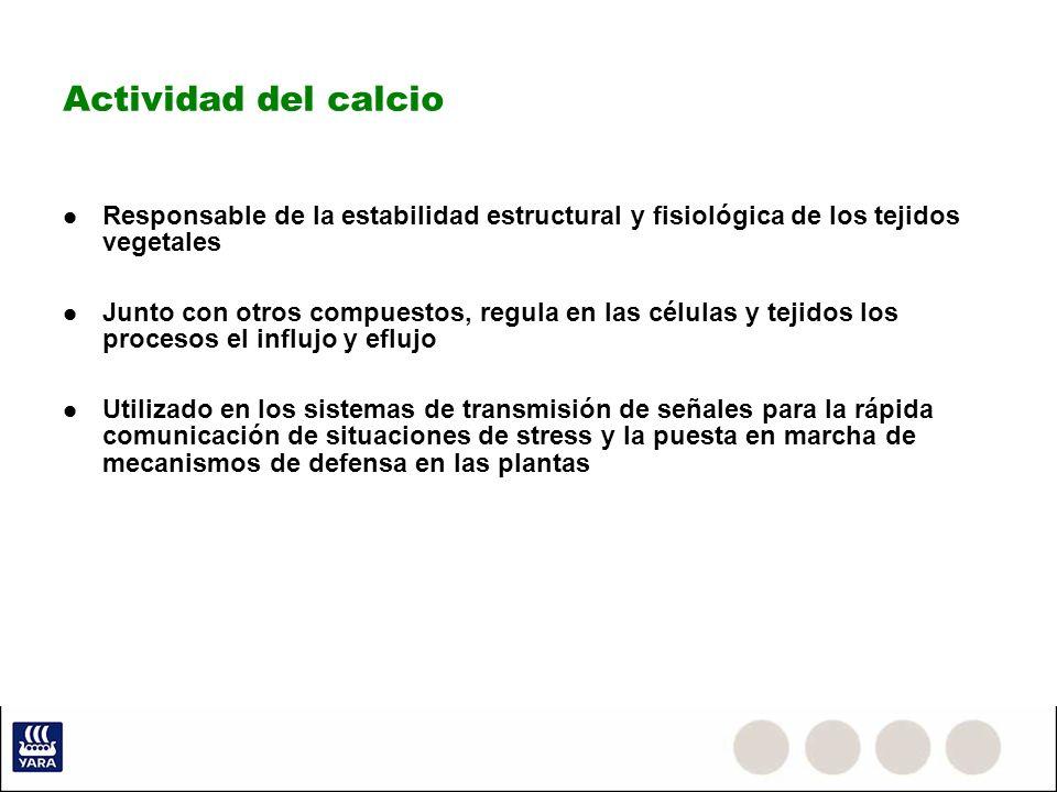 Actividad del calcio Responsable de la estabilidad estructural y fisiológica de los tejidos vegetales Junto con otros compuestos, regula en las célula