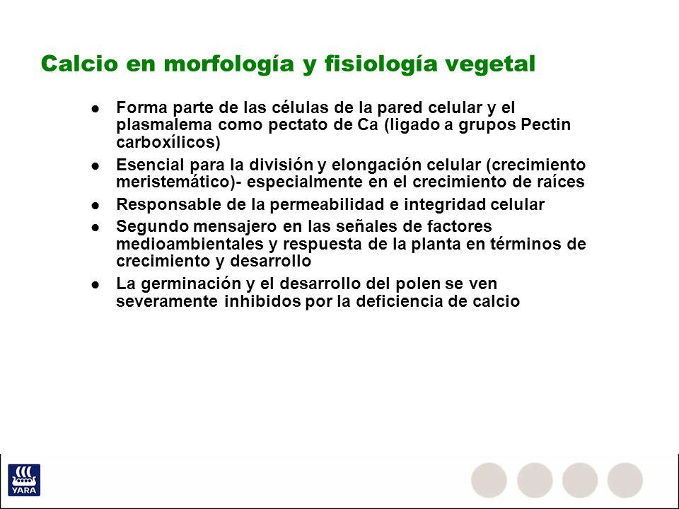 Calcio en morfología y fisiología vegetal Forma parte de las células de la pared celular y el plasmalema como pectato de Ca (ligado a grupos Pectin ca