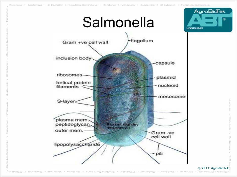 © 2011. AgroBioTek Salmonella Conociendo Entendiendo Enemigo