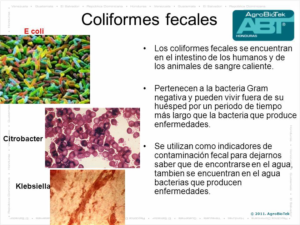 © 2011. AgroBioTek Coliformes fecales Los coliformes fecales se encuentran en el intestino de los humanos y de los animales de sangre caliente. Perten