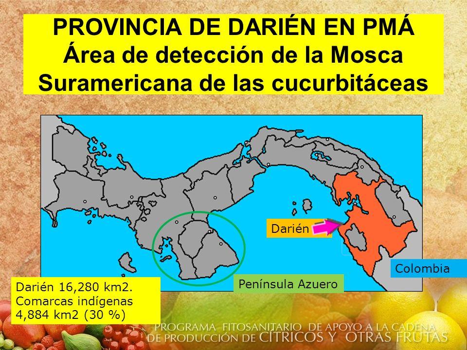 PROVINCIA DE DARIÉN EN PMÁ Área de detección de la Mosca Suramericana de las cucurbitáceas Colombia Darién Darién 16,280 km2. Comarcas indígenas 4,884